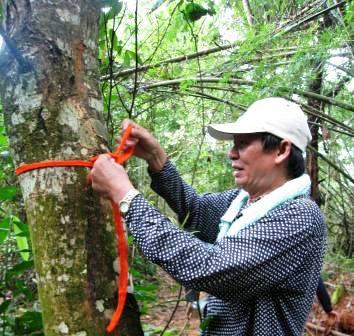 Sacred forest & land