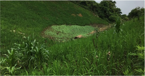 Promoting agroecology farming for self-reliant livelihood of local upland farmers in Luang Prabang, Laos